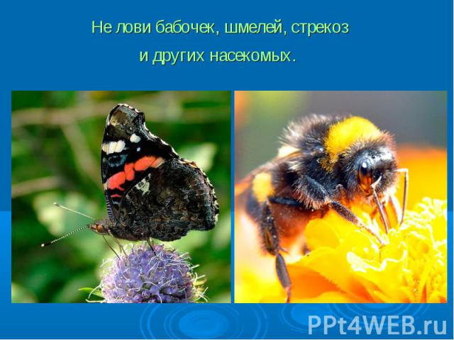 Не лови бабочек, шмелей, стрекоз и других насекомых.