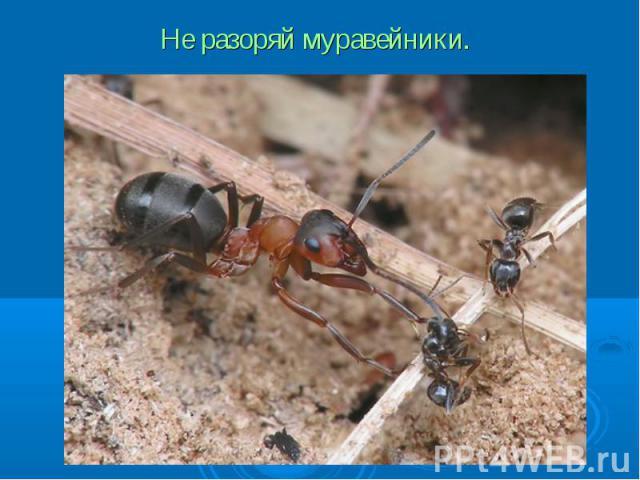 Не разоряй муравейники.