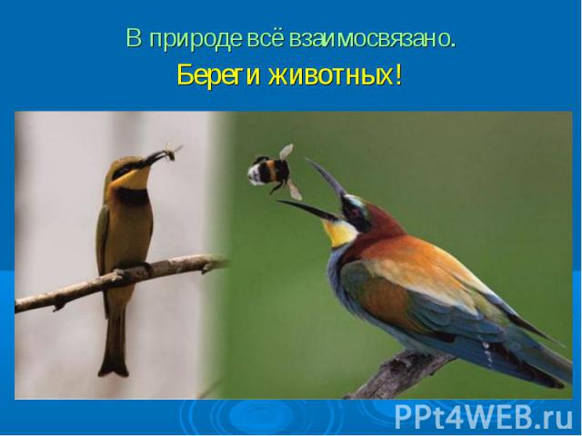 В природе всё взаимосвязано. Береги животных!