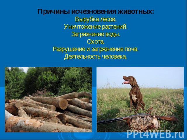 Причины исчезновения животных:Вырубка лесов.Уничтожение растений.Загрязнение воды.Охота.Разрушение и загрязнение почв.Деятельность человека.