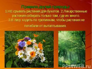 Правила друзей природы: 1.НЕ срывать растения для букетов. 2.Лекарственные расте