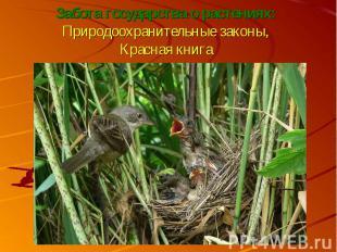 Забота государства о растениях:Природоохранительные законы,Красная книга