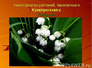 Некоторые из растений, занесенные в Красную книгу.Ландыши.