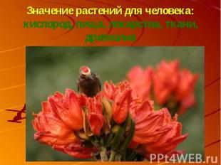 Значение растений для человека:кислород, пища, лекарства, ткани, древесина
