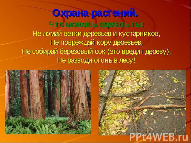 Охрана растений. Что можешь сделать ты:Не ломай ветки деревьев и кустарников,Не повреждай кору деревьев,Не собирай березовый сок (это вредит дереву),Не разводи огонь в лесу!