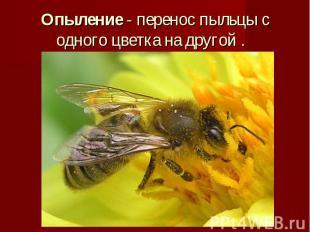 Опыление - перенос пыльцы с одного цветка на другой .