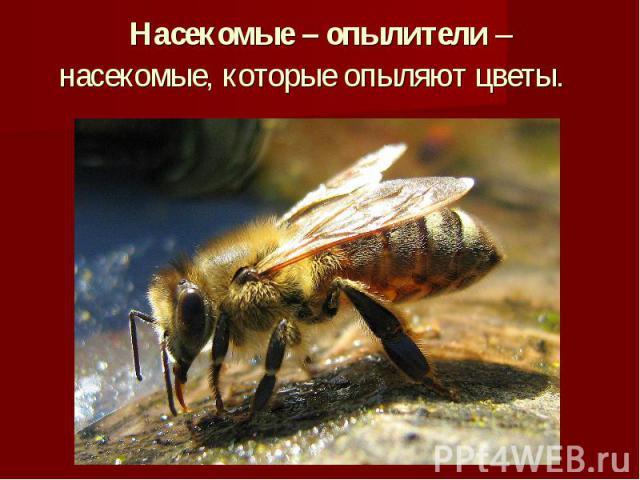 Насекомые – опылители –насекомые, которые опыляют цветы.