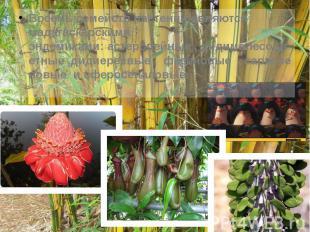 Восемь семейств растений являются мадагаскарскими эндемиками:астеропейные&