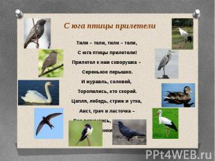 С юга птицы прилетели Тили – тели, тили – тели, С юга птицы прилетели! Прилетел