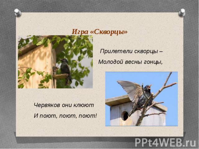 Игра «Скворцы» Прилетели скворцы – Молодой весны гонцы, Червяков они клюют И поют, поют, поют!