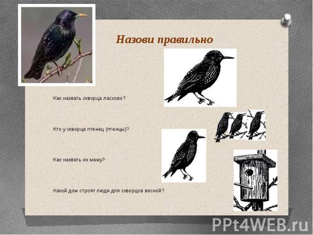 Назови правильно Как назвать скворца ласково? Кто у скворца птенец (птенцы)? Как назвать их маму? Какой дом строят люди для скворцов весной?