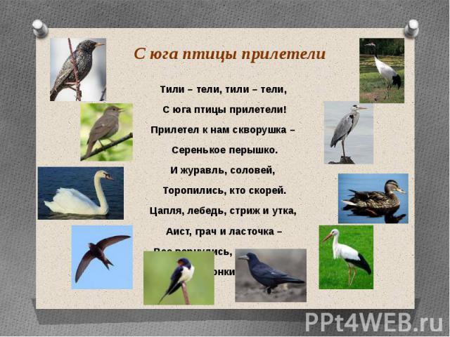 С юга птицы прилетели Тили – тели, тили – тели, С юга птицы прилетели! Прилетел к нам скворушка – Серенькое перышко. И журавль, соловей, Торопились, кто скорей. Цапля, лебедь, стриж и утка, Аист, грач и ласточка – Все вернулись, прилетели, Песни зво…