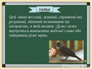 Цей птах веселий, жвавий, спритний та розумний, здатний пожвавити ту місцевість,