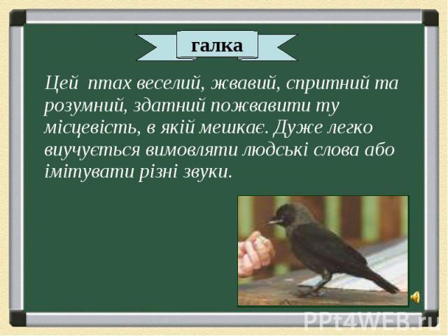 Цей птах веселий, жвавий, спритний та розумний, здатний пожвавити ту місцевість, в якій мешкає. Дуже легко виучується вимовляти людські слова або імітувати різні звуки. Цей птах веселий, жвавий, спритний та розумний, здатний пожвавити ту місцевість,…