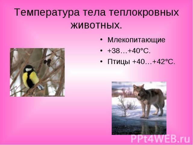 Температура тела теплокровных животных.Млекопитающие+38…+40°С.Птицы +40…+42°С.