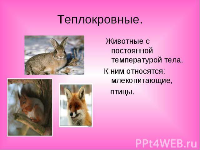 Теплокровные. Животные с постоянной температурой тела.К ним относятся: млекопитающие, птицы.