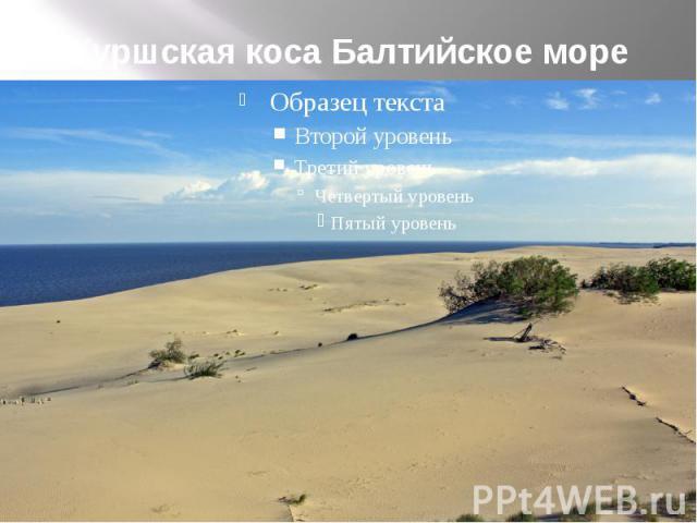 Куршская коса Балтийское море