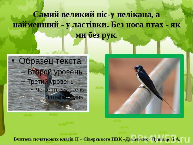Самий великий ніс-у пелікана, а найменший - у ластівки. Без носа птах - як ми без рук.