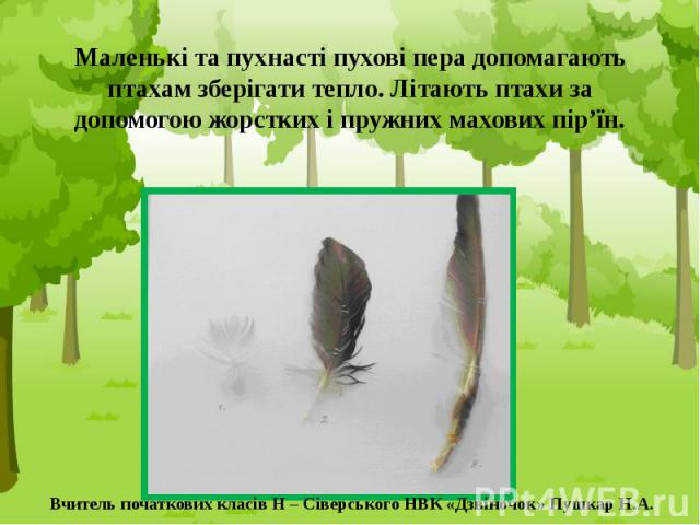 Маленькі та пухнасті пухові пера допомагають птахам зберігати тепло. Літають птахи за допомогою жорстких і пружних махових пір'їн.
