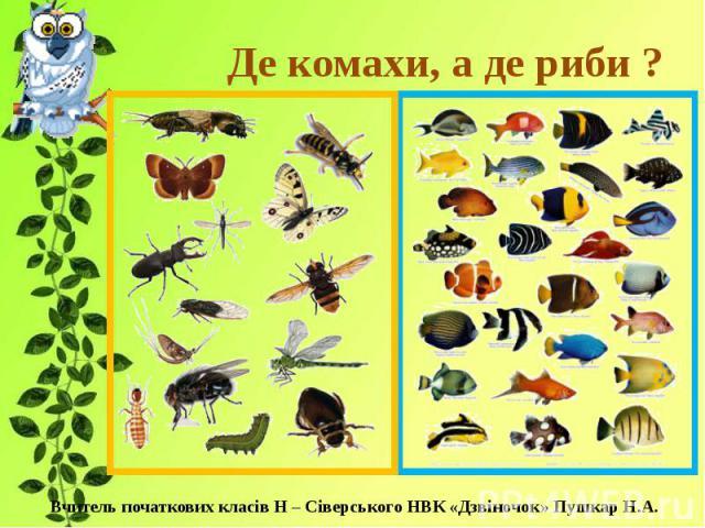 Де комахи, а де риби ?