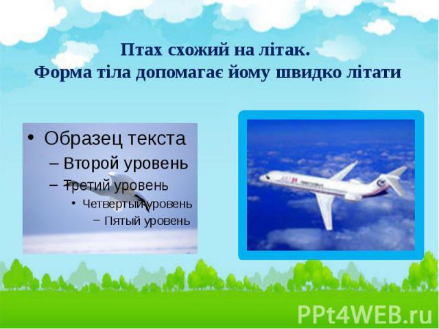 Птах схожий на літак. Форма тіла допомагає йому швидко літати