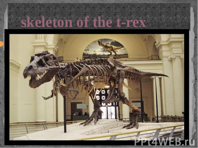 skeleton of the t-rex