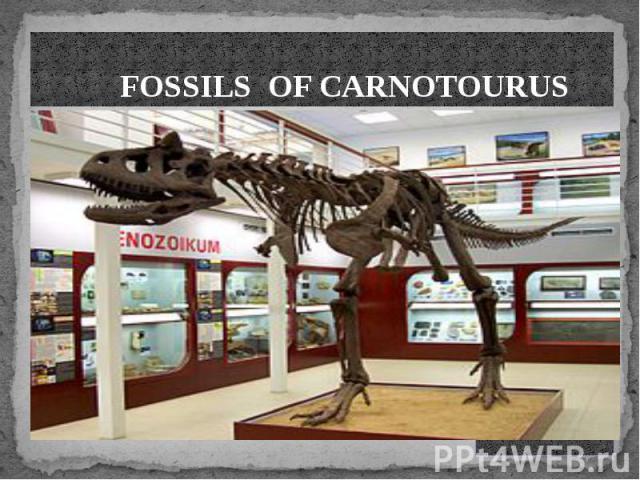 FOSSILS OF CARNOTOURUS