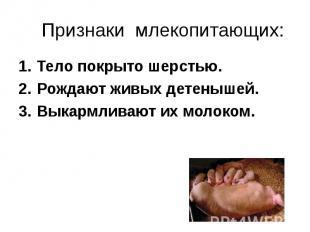 Тело покрыто шерстью. Тело покрыто шерстью. Рождают живых детенышей. Выкармливаю