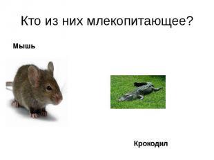 Мышь Мышь