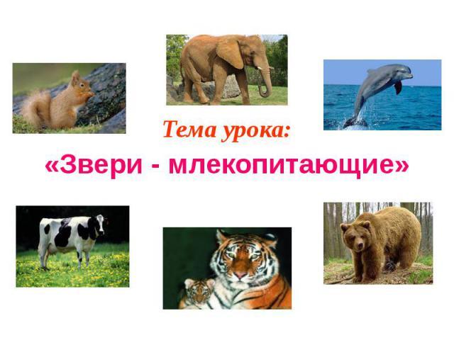 Тема урока: Тема урока: «Звери - млекопитающие»