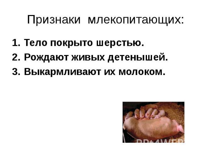Тело покрыто шерстью. Тело покрыто шерстью. Рождают живых детенышей. Выкармливают их молоком.