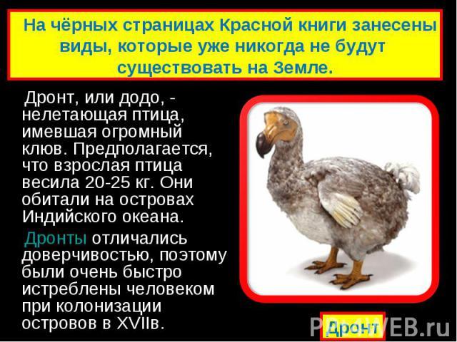 Дронт, или додо, - нелетающая птица, имевшая огромный клюв. Предполагается, что взрослая птица весила 20-25 кг. Они обитали на островах Индийского океана. Дронт, или додо, - нелетающая птица, имевшая огромный клюв. Предполагается, что взрослая птица…