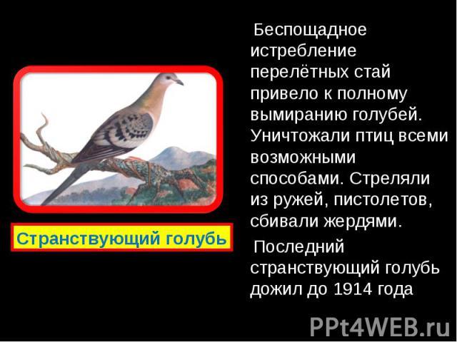 Беспощадное истребление перелётных стай привело к полному вымиранию голубей. Уничтожали птиц всеми возможными способами. Стреляли из ружей, пистолетов, сбивали жердями. Беспощадное истребление перелётных стай привело к полному вымиранию голубей. Уни…