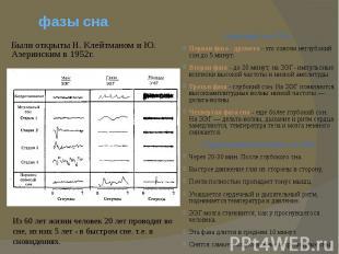 фазы снаБыли открыты Н. Клейтманом и Ю. Азеринским в 1952г.
