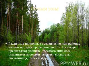 Лесная зона Различные природные условия в лесных районах влияют на характер раст