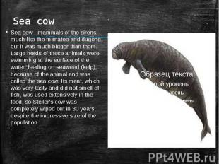 Sea cowSea cow - mammals of the sirens, much like the manatee and dugong, but it