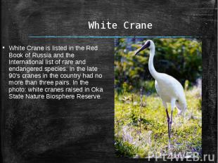White CraneWhite Crane is listed in the Red Book of Russia and the International