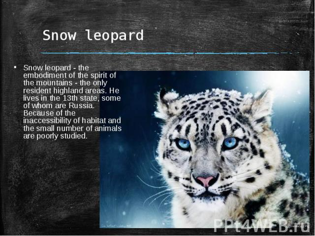 Snow leopardSnow leopard - the embodiment of the spirit of the mountains - the only resident highland areas. He lives in the 13th state, some of whom are Russia. Because of the inaccessibility of habitat and the small number of animals are poorly studied.