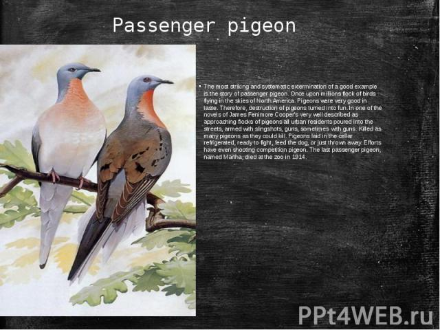 Passenger pigeonThe most striking and systematic extermination of a good example is the story of passenger pigeon. Once upon millions flock of birds flying in the skies of North America. Pigeons were very good in taste. Therefore, destruction of pig…