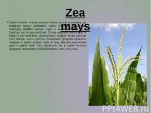 Родина Злакові (Poaceaе) включає близько десяти тисяч видів, що поширені досить