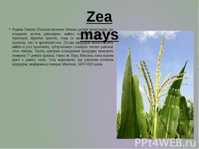 Родина Злакові (Poaceaе) включає близько десяти тисяч видів, що поширені досить рівномірно майже по всій Землі, крім територій, вкритих кригою, тому їх можна побачити як у тропіках, так і в арктичній зоні. Посіви кукурудзи можна знайти майже в усіх …