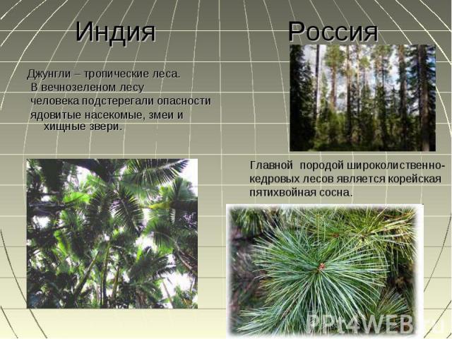 Джунгли – тропические леса. Джунгли – тропические леса. В вечнозеленом лесу человека подстерегали опасности ядовитые насекомые, змеи и хищные звери.