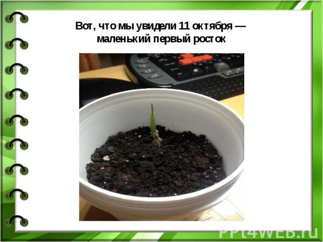 Вот, что мы увидели 11 октября — маленький первый росток