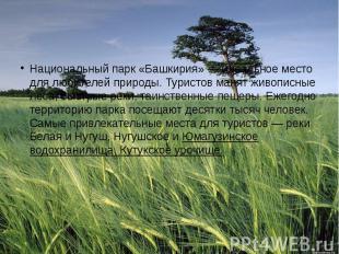 Национальный парк «Башкирия» — идеальное место для любителей природы. Туристов м