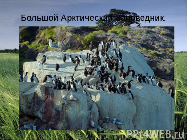 Большой Арктический Заповедник.