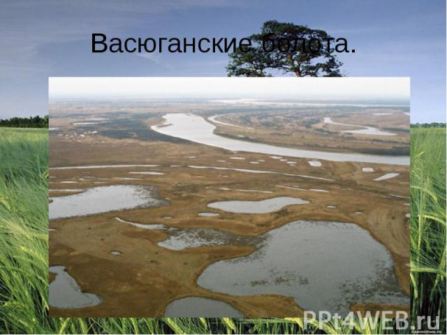 Васюганские болота.