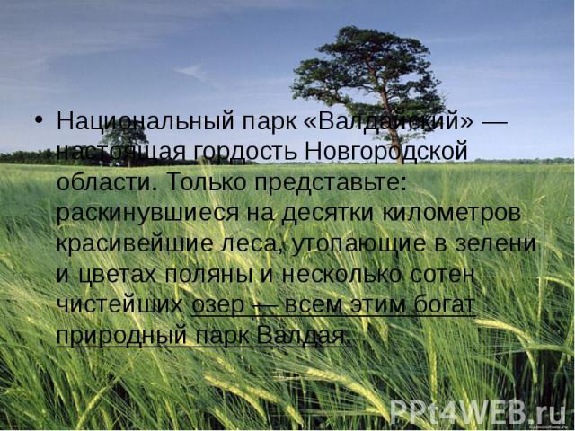 Национальный парк «Валдайский» — настоящая гордость Новгородской области. Только представьте: раскинувшиеся на десятки километров красивейшие леса, утопающие в зелени и цветах поляны и несколько сотен чистейшихозер — всем этим богат природный …