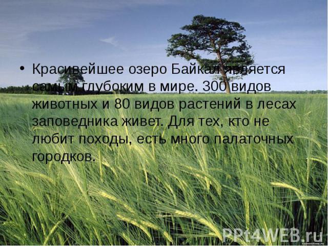 Красивейшее озеро Байкал является самым глубоким в мире. 300 видов животных и 80 видов растений в лесах заповедника живет. Для тех, кто не любит походы, есть много палаточных городков.