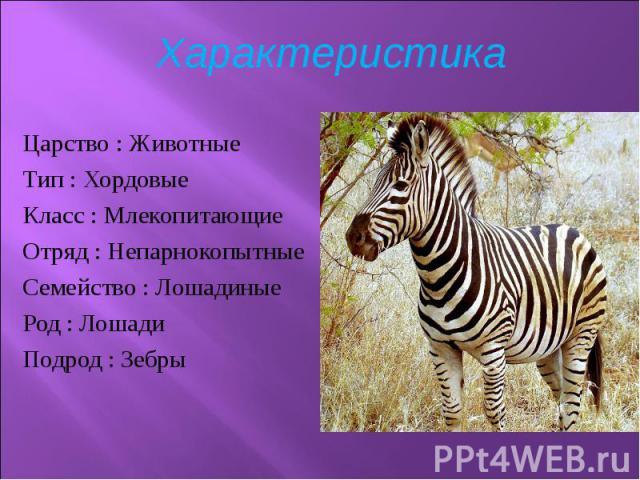 Царство :Животные Царство :Животные Тип :Хордовые Класс :Млекопитающие Отряд :Непарнокопытные Семейство : Лошадиные Род :Лошади Подрод :Зебры