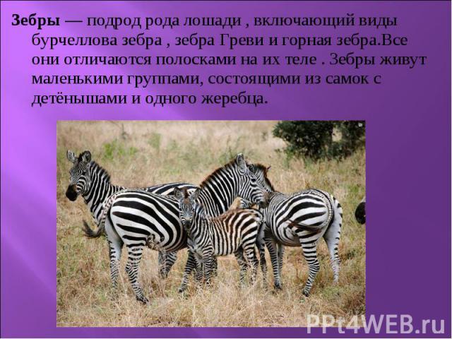 Зебры — подрод родалошади , включающий виды бурчеллова зебра ,зебра Гревиигорная зебра.Все они отличаются полосками на их теле .Зебры живут маленькими группами, состоящими из самок с детёнышами и одного жеребца. Зебры —…